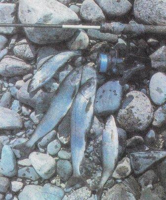 Хариус наживки и насадки рыболов