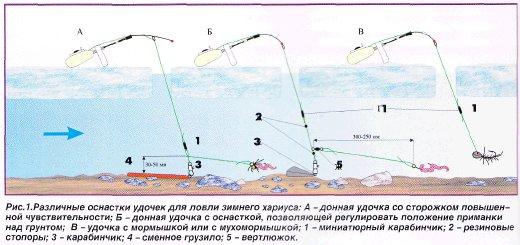 Зимний хариус полярного урала