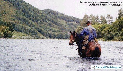 рыбалка на алтае река чарыш